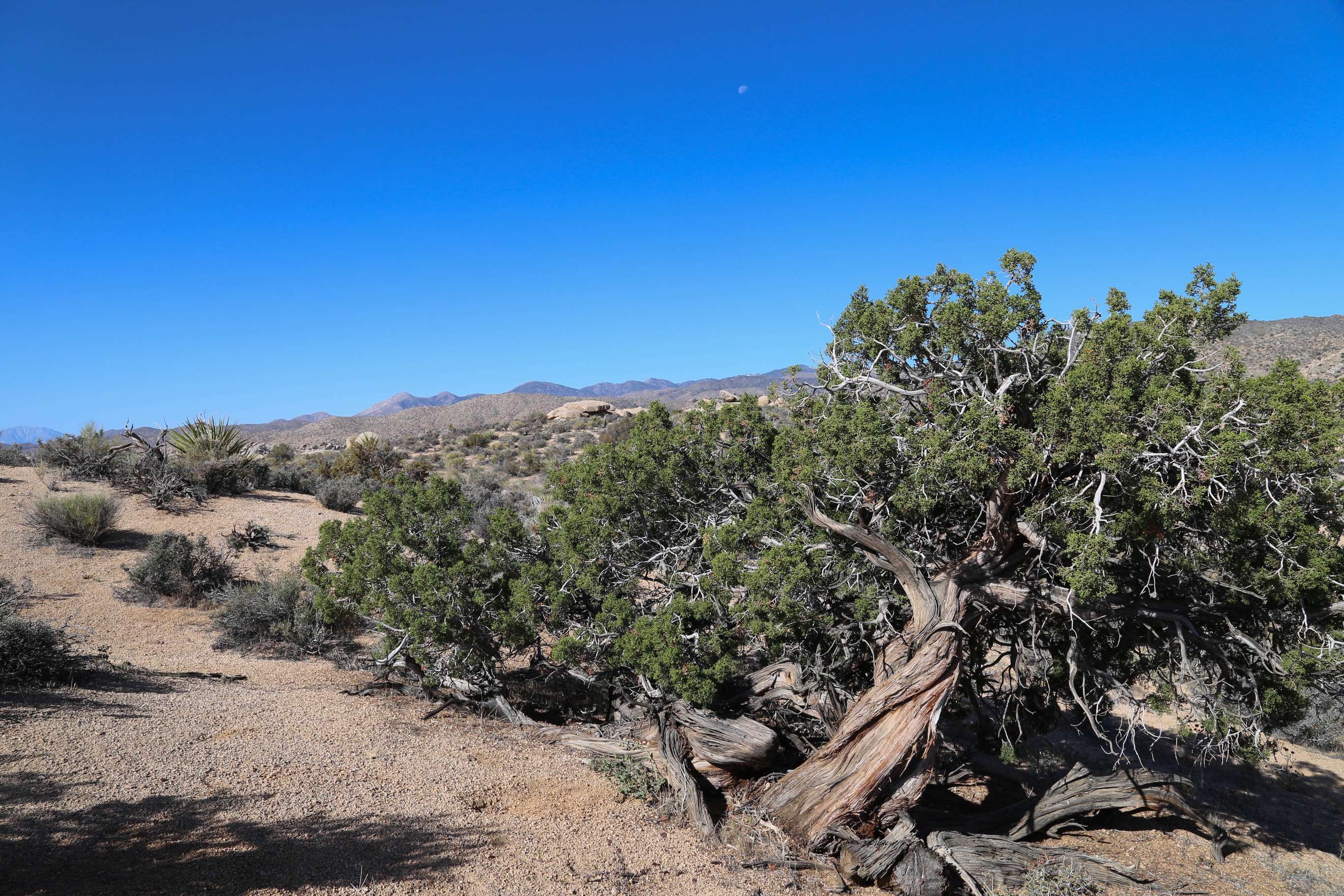 The desert landscape of Yucca Valley just waits to be explored.