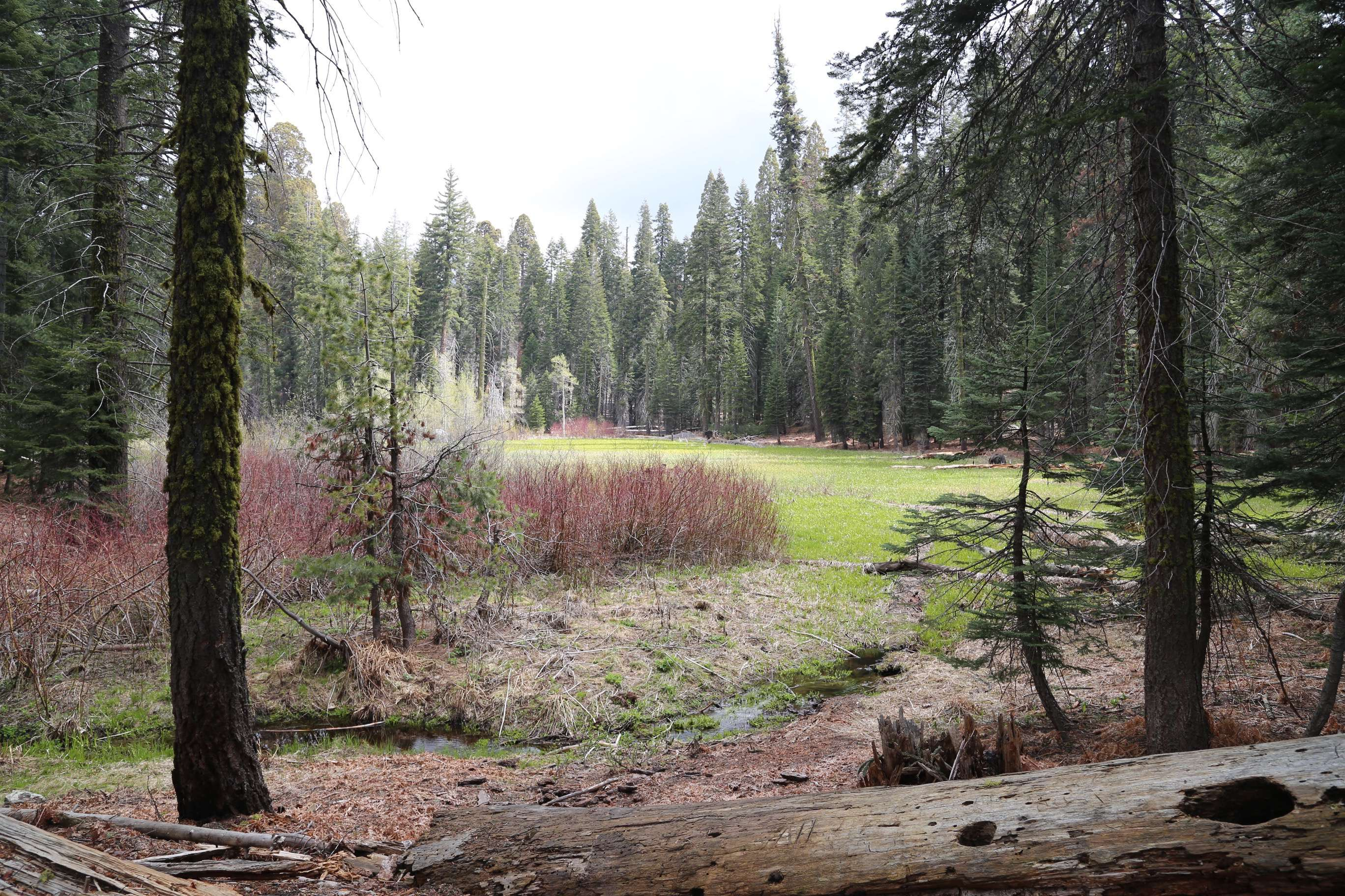 """Crescent Meadow, SNP, was dubbed, """"Gem of the Sierras,"""" by the renowned naturalist John Muir."""