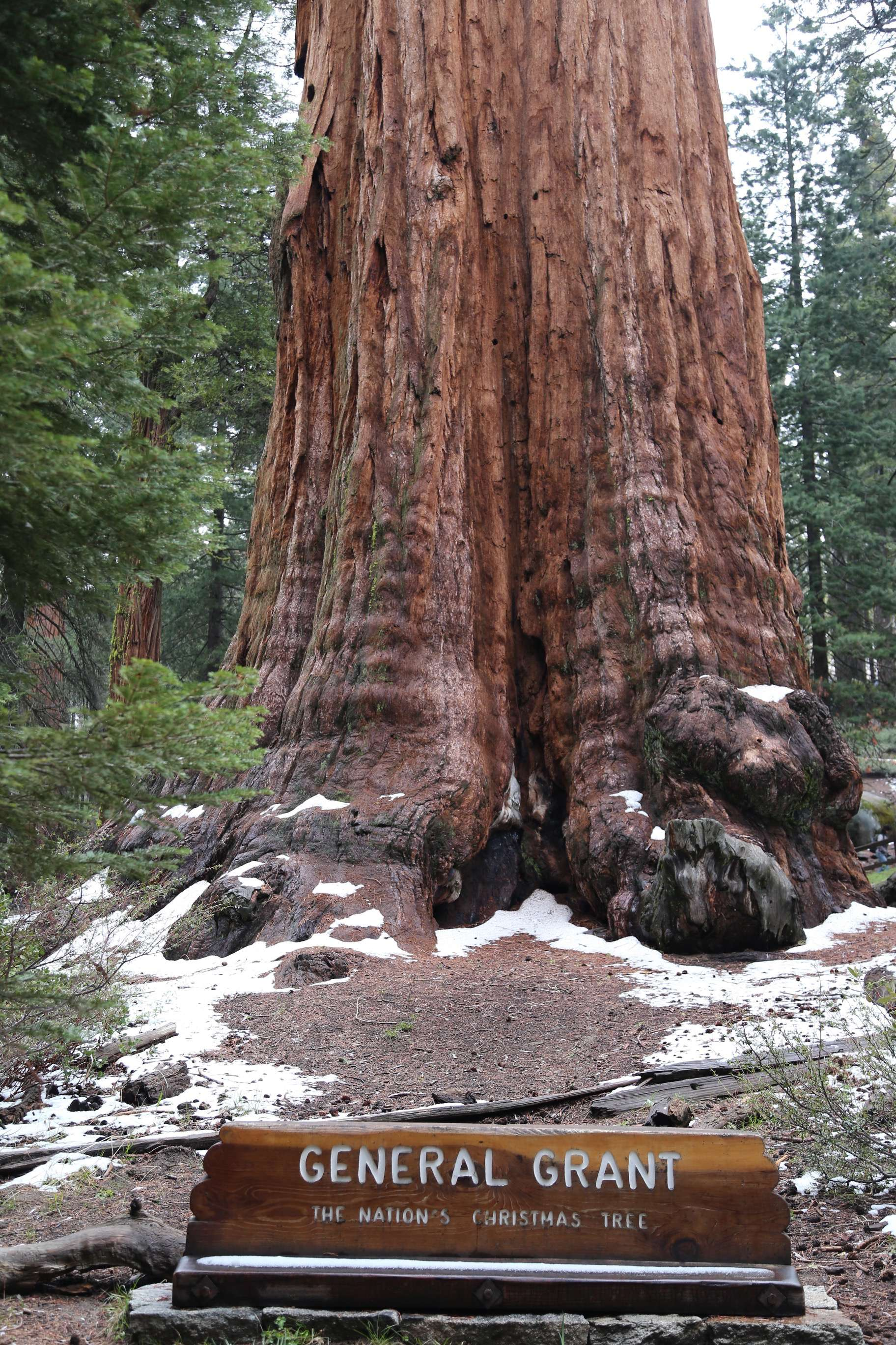 General Grant in Kings Canyon National Park is the largest giant sequoia there, and number two behind General Sherman.