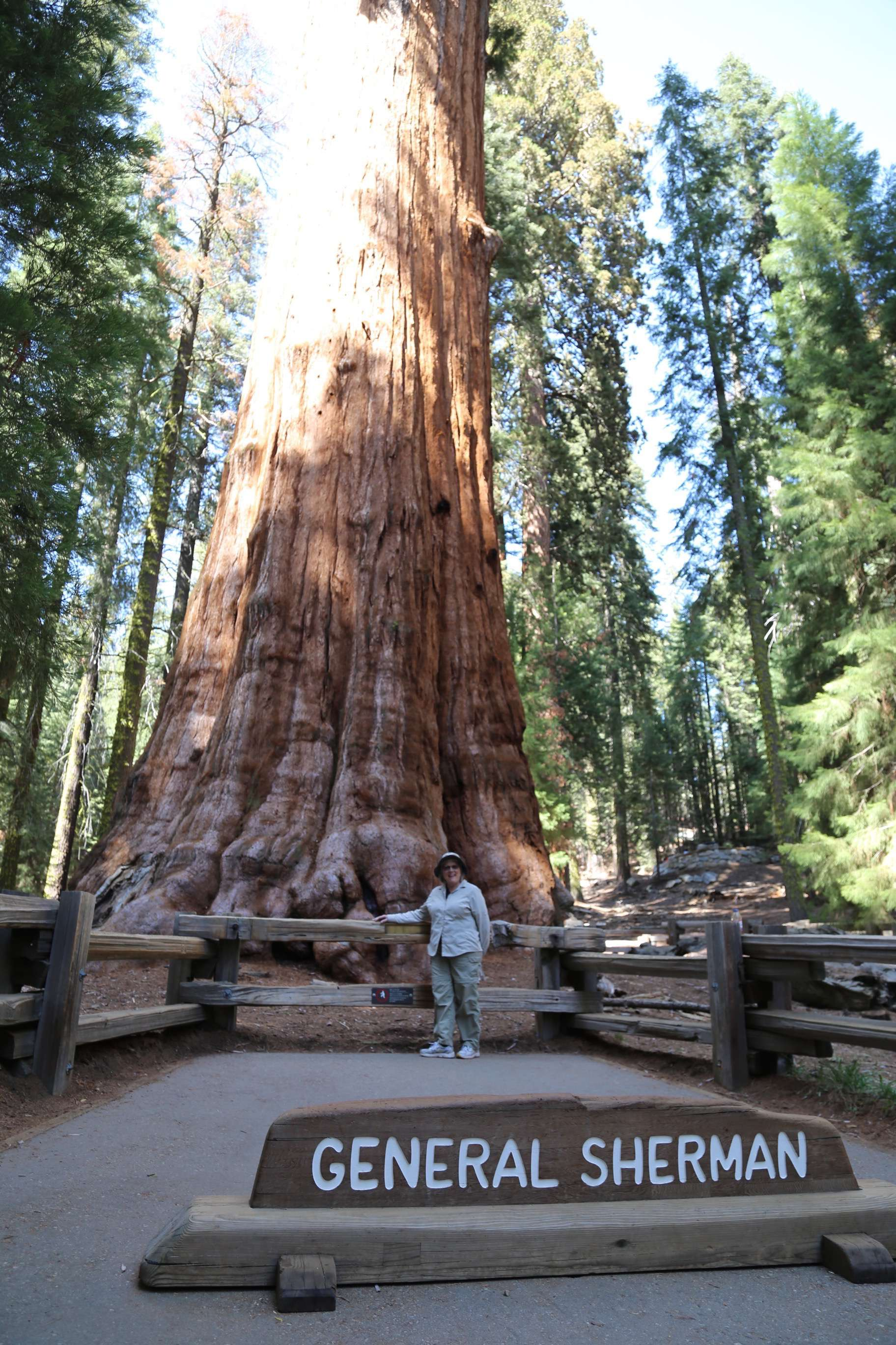 General Sherman, in Sequoia National Park, the largest single tree in the world by trunk volume.