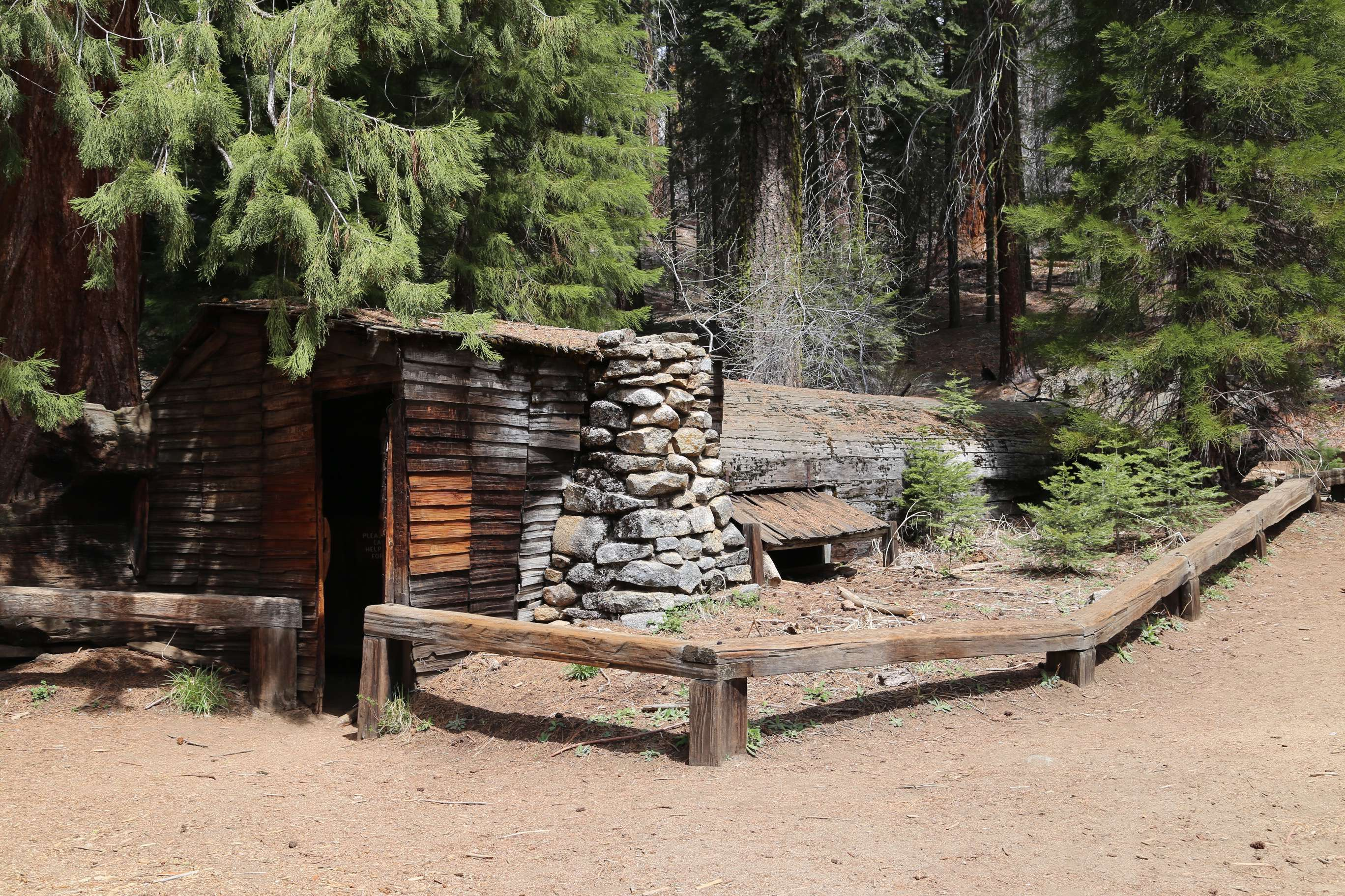Tharp's Log, SNP, was used as a home and headquarters for the rancher who fashioned a 70' home inside the fallen giant.