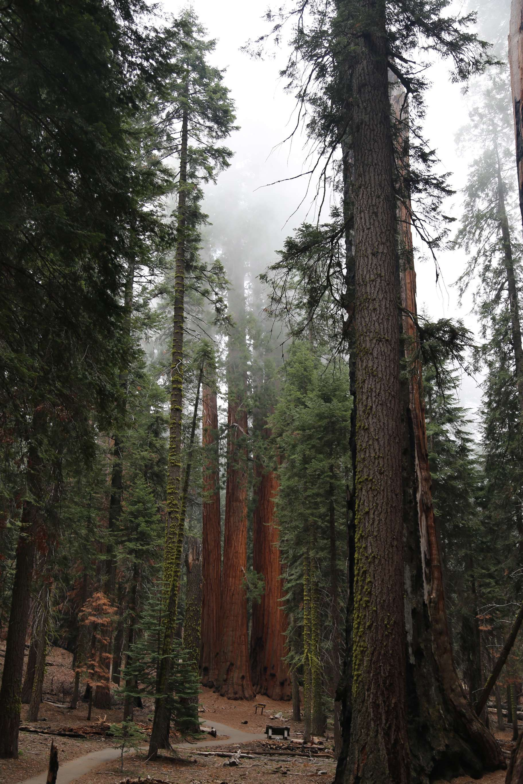 An afternoon mist rolls in, adding some measure to the cycle of rain and moisture that sustains the giant sequoias. This group has been named The House, after the other body in the U.S. Congress.