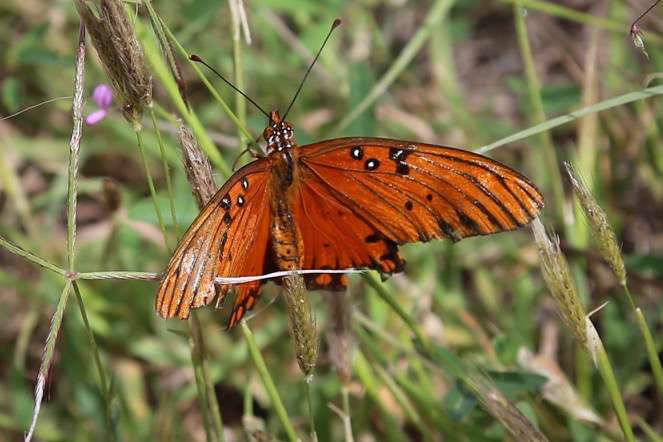 More than 100 varieties of butterflies live in and visit El Charco.