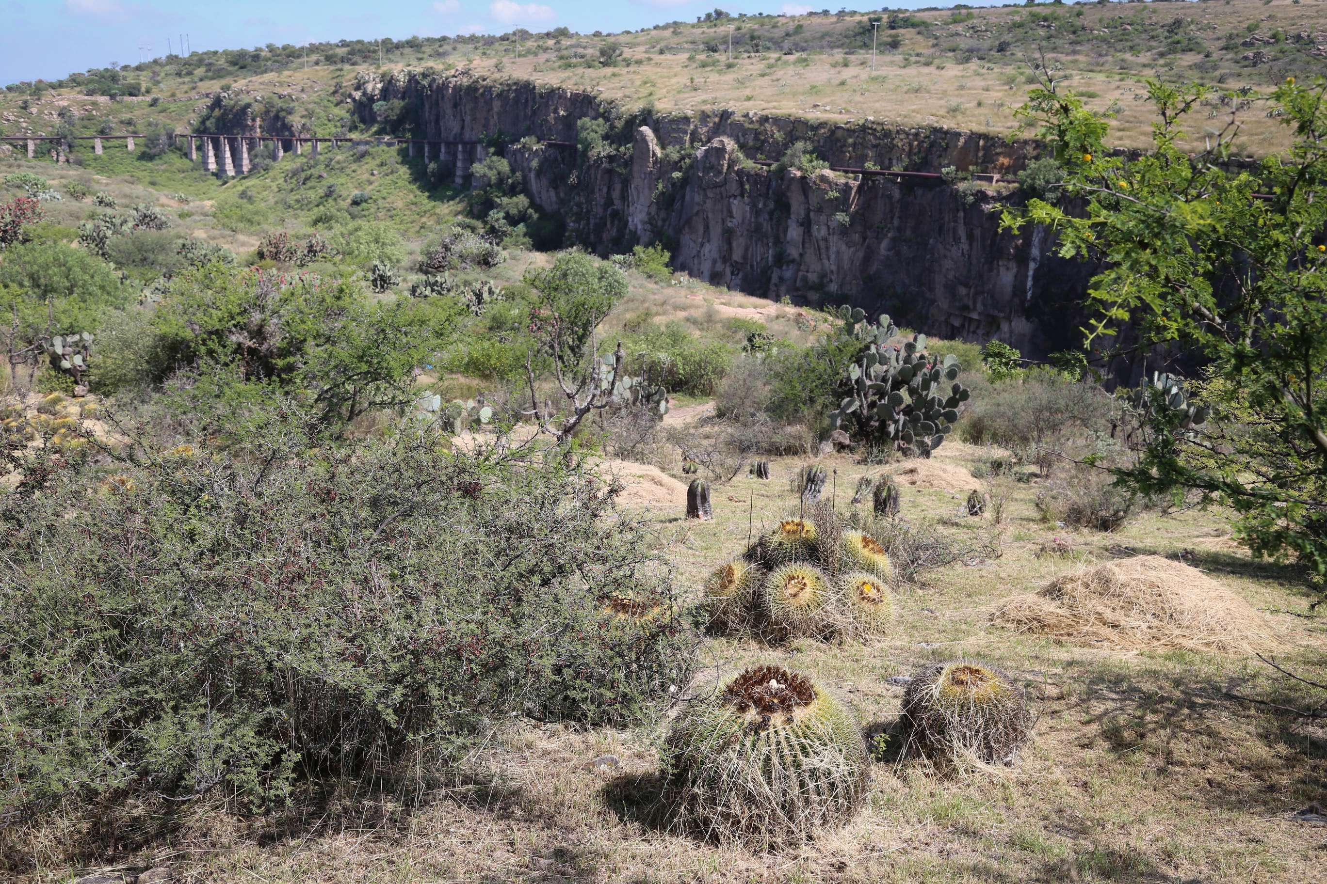 The grounds of El Charco shows the dry scrubland that is home to the succulents and the deep canyon beyond.