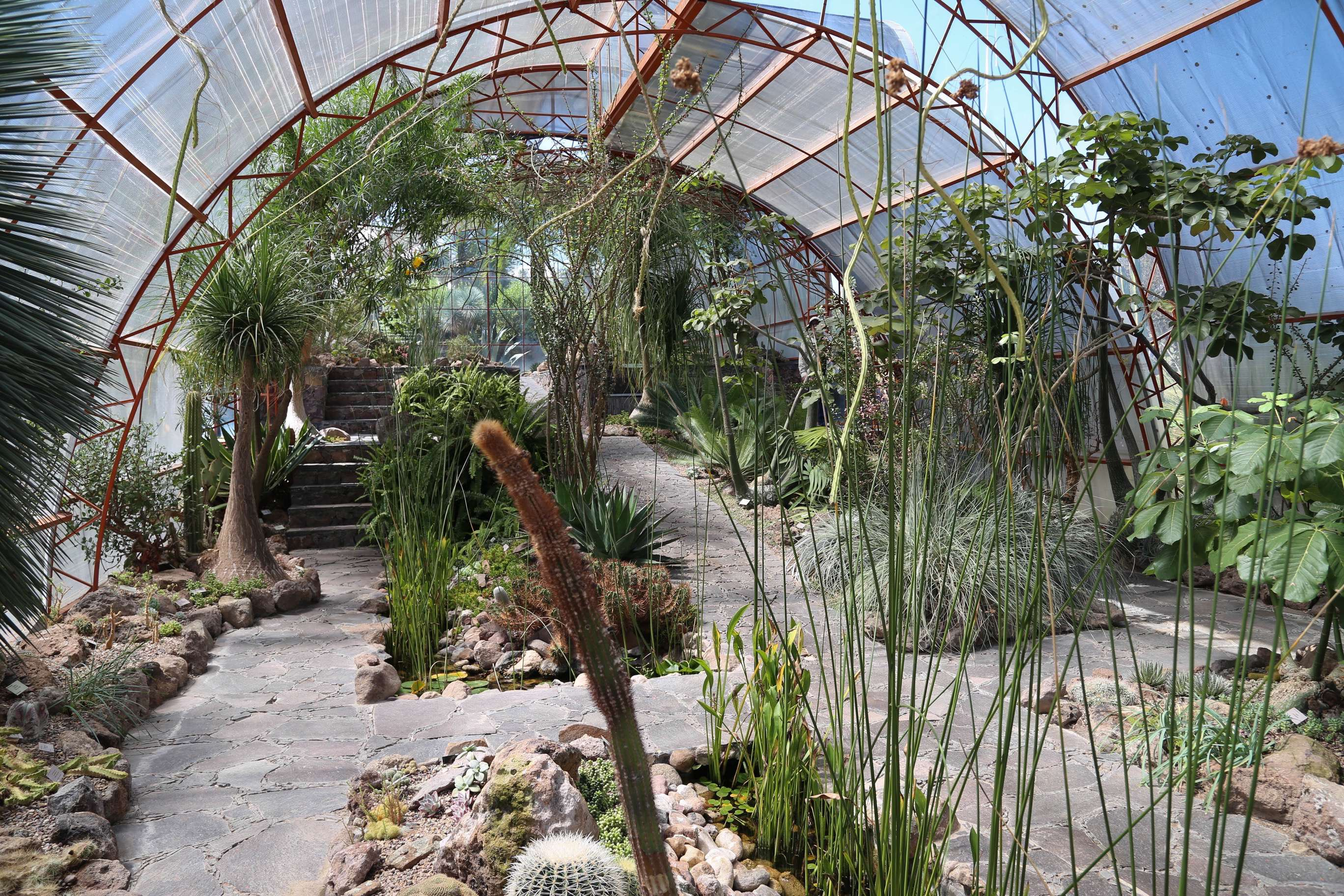 Inside the greenhouse is the second largest collection of succulents in Mexico.