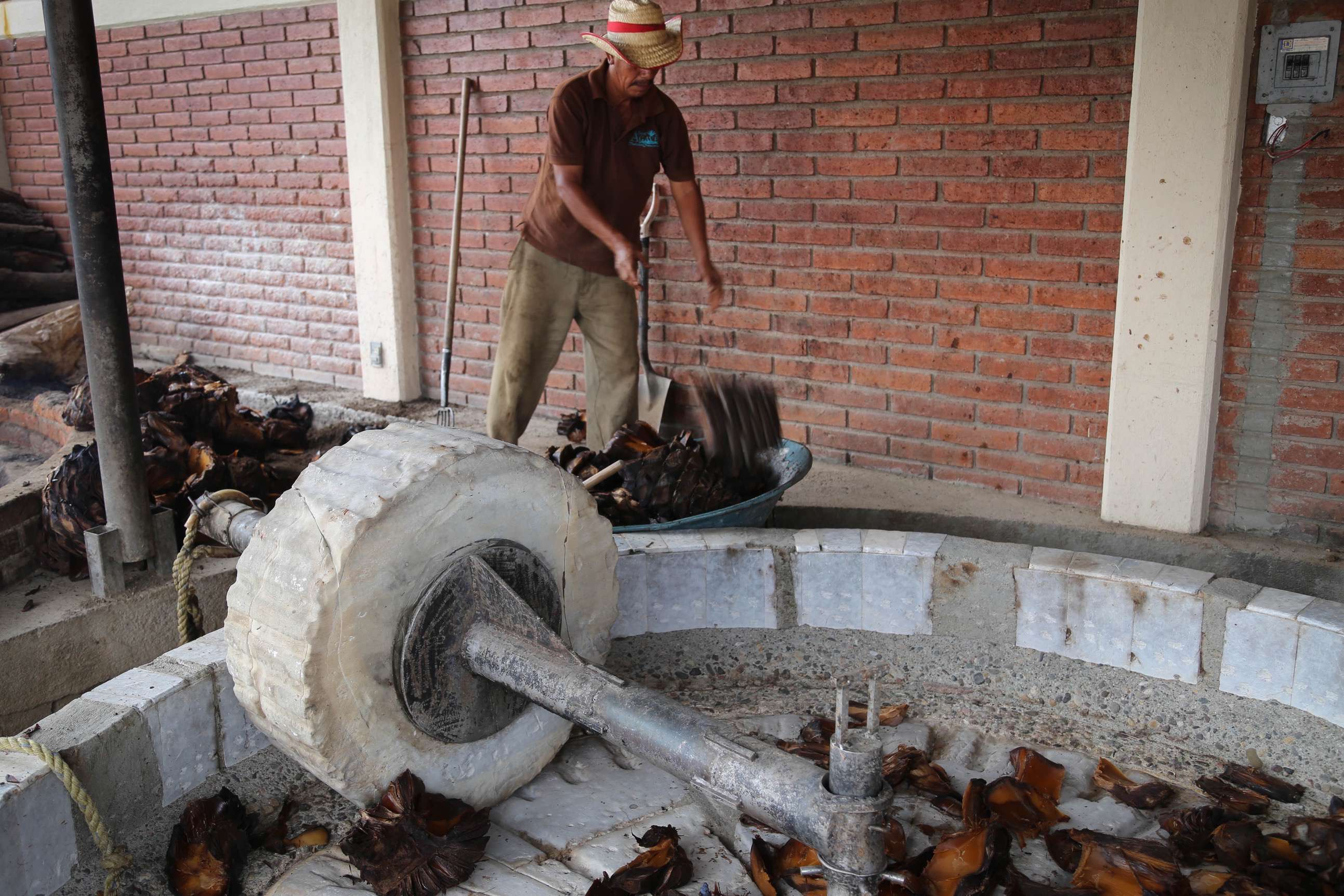 Piñas that have been properly roasted are then tossed into the press, where an animal will walk around outside, pulling the pressing stone to extract the juice.