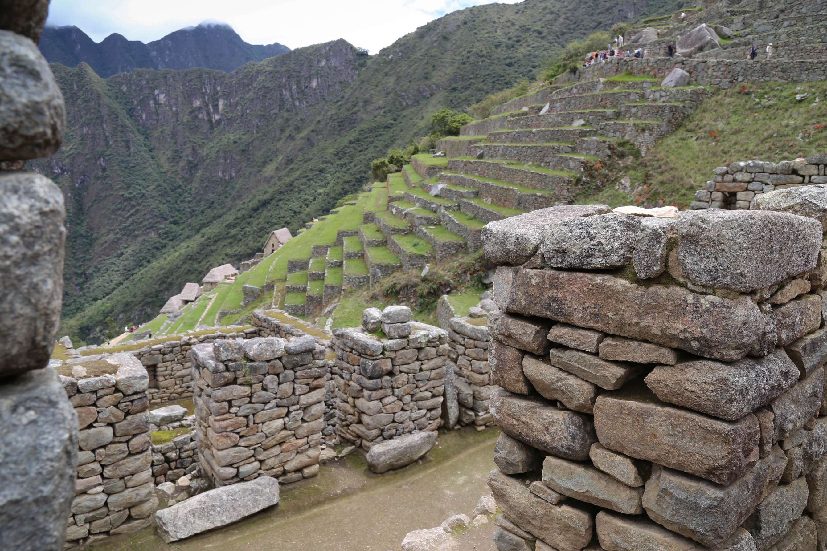 Terraces are one of the major features at Machu Picchu. They act as anchors to the hilldsides, provide an area for raising food crops and are ideal for handling 80 inches of rainfall and runoff the area gets every year.