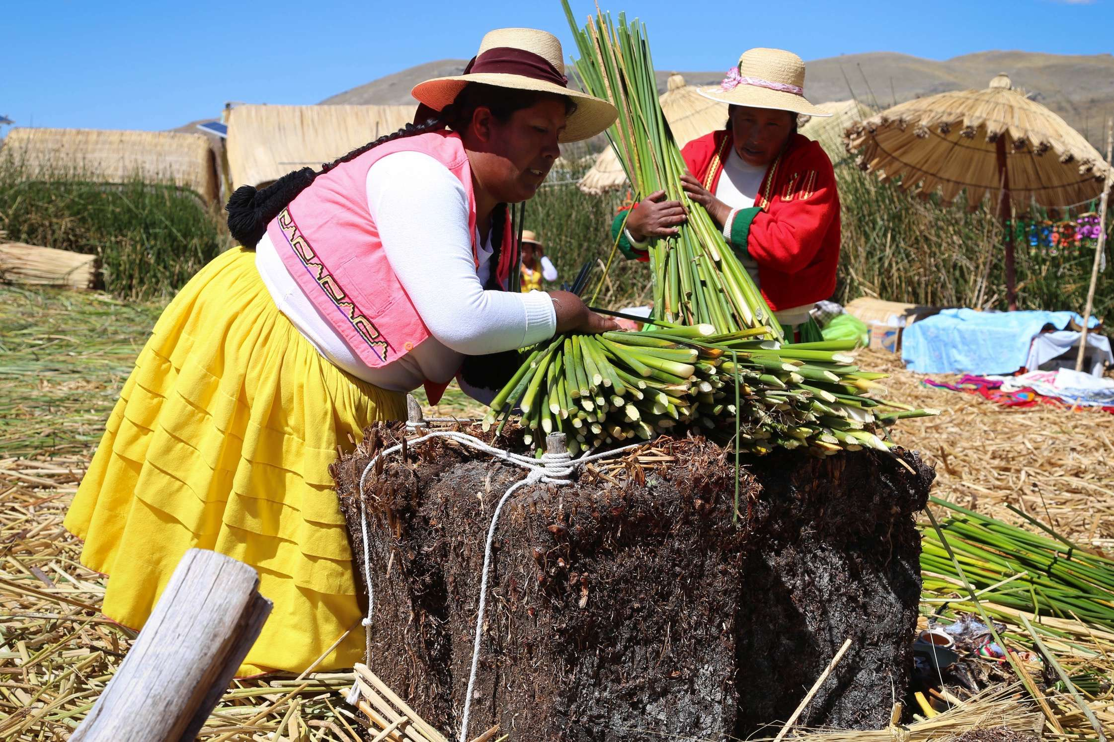 To rebuild their island, dried totora reeds are piled on top, as shown in this demonstration.