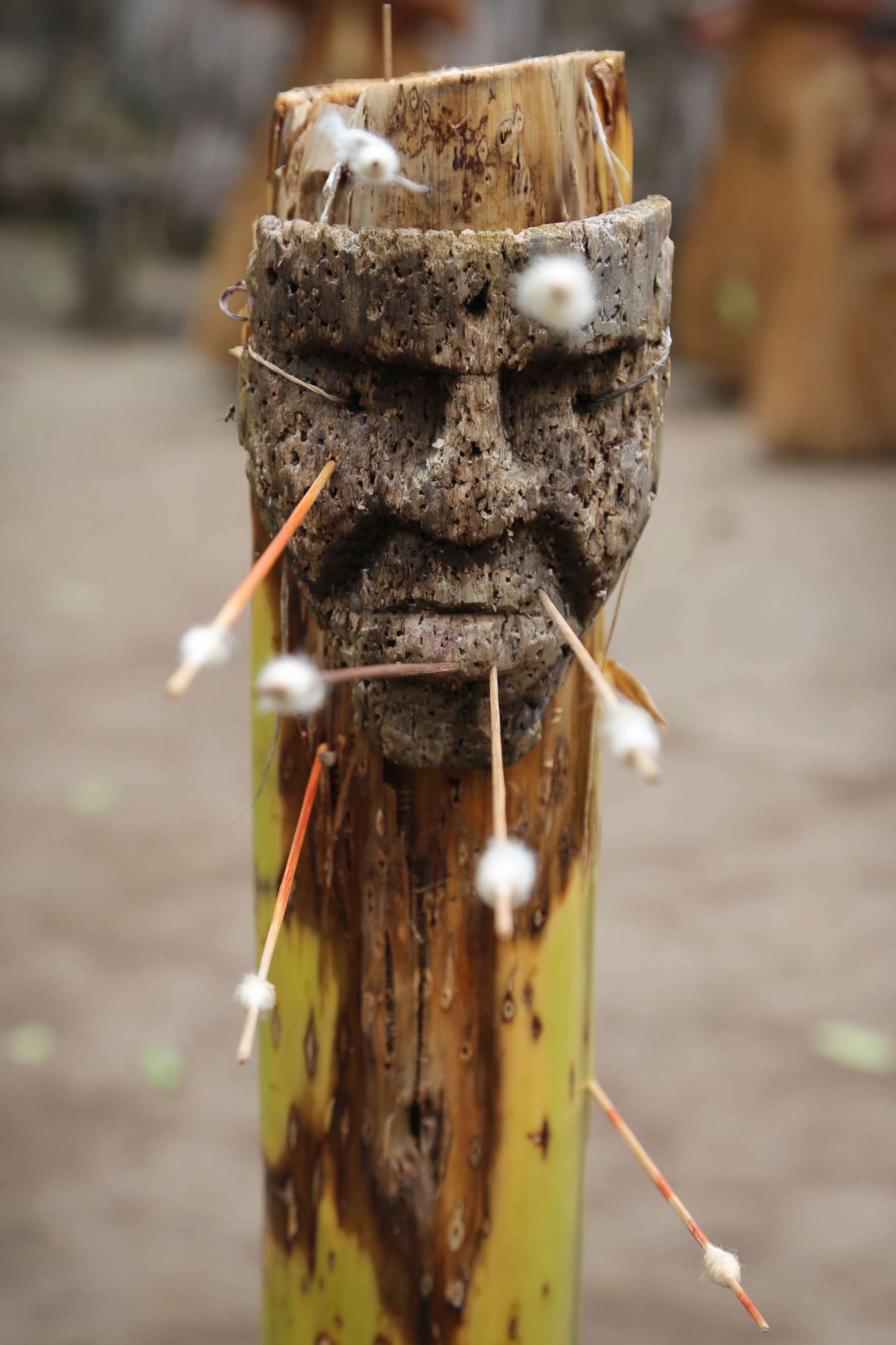 The Yagua are highly skilled in the use of the blowguns and are deadly accurate from 25 or 30 yards, or more.