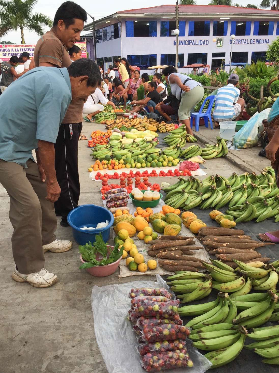 Small villages up and down the Amazon raise food crops for sale at open air markets.
