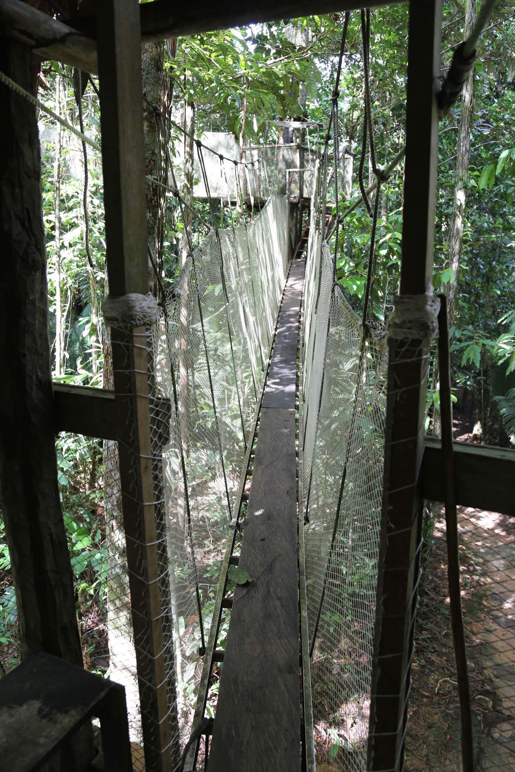 If you're okay with heights and a bit of swaying under your feet, it's easy to traverse the canopy walkway.
