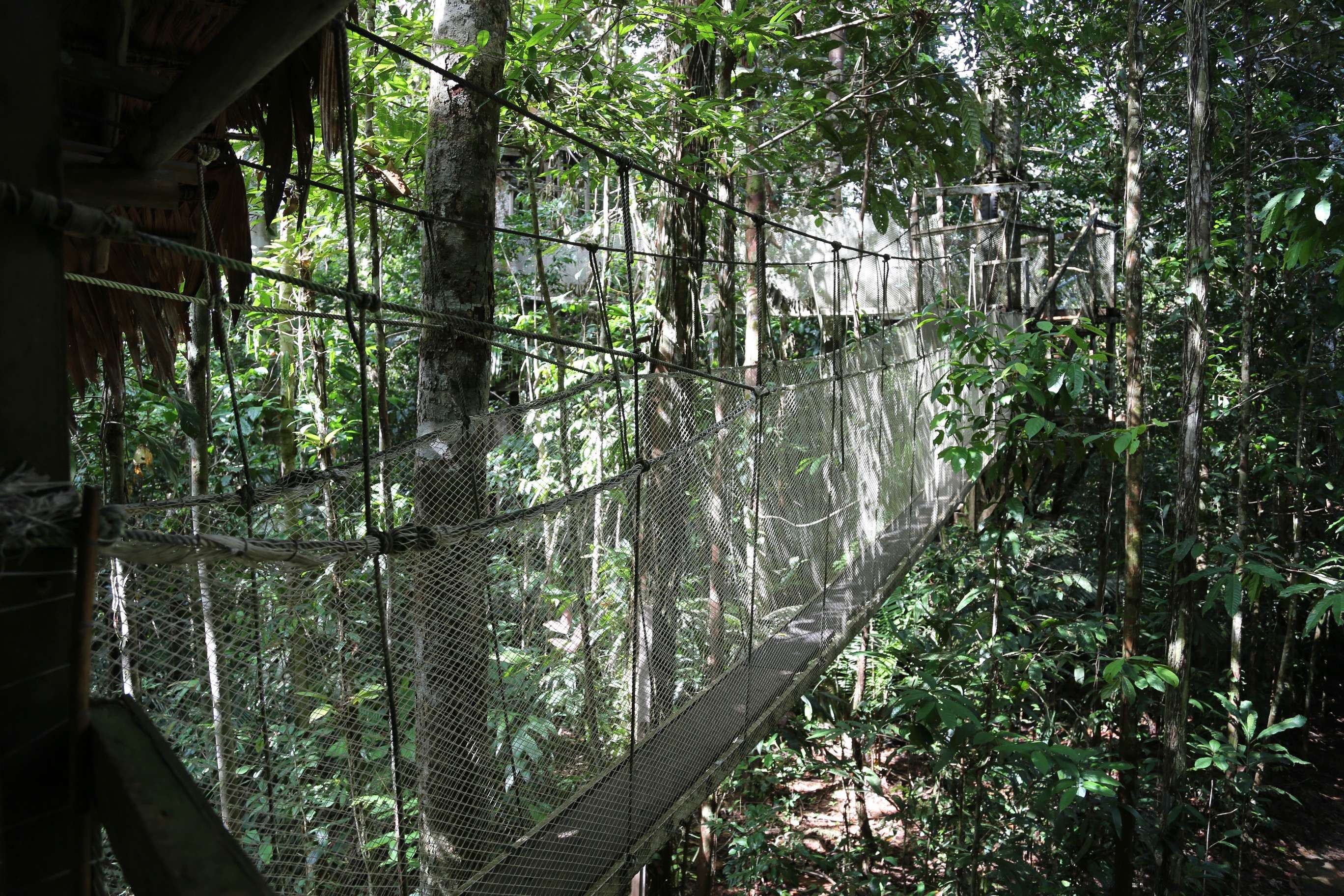 The walkways is actually quite sturdy, using steel cables for support and strong mesh to keep you from falling.