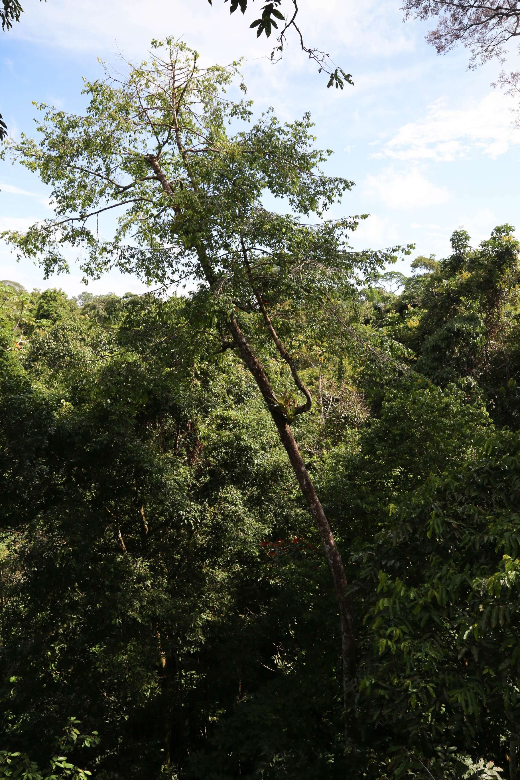Once you are at treetop level, you gain a new appreciation for the jungle canopy.