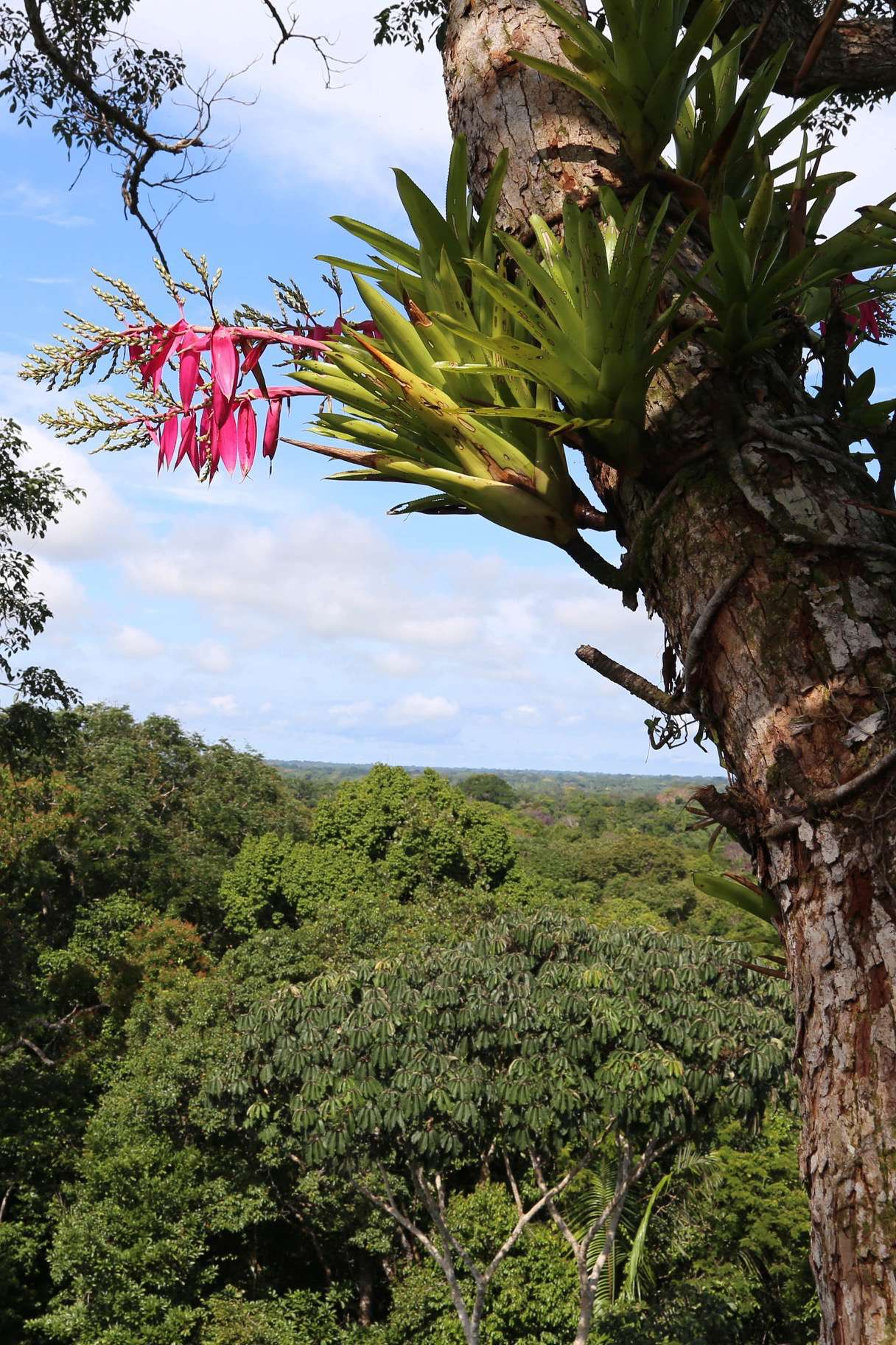 The beauty of the Amazon jungle as seen from treetop level.
