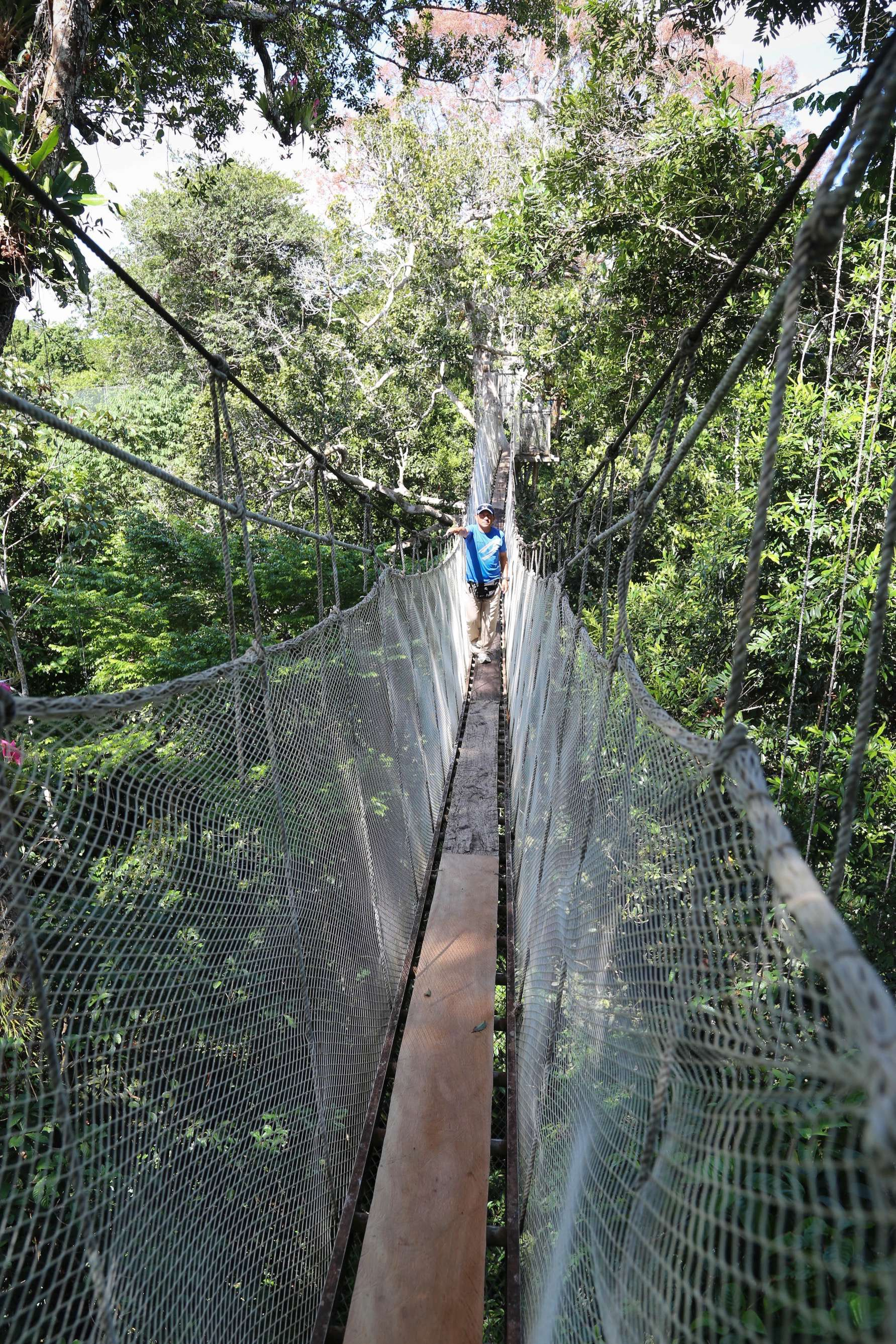 For guide Willie Flores Lanza, walking the canopy is almost an everyday experience. For others, it's a once-in-a-lifetime event.