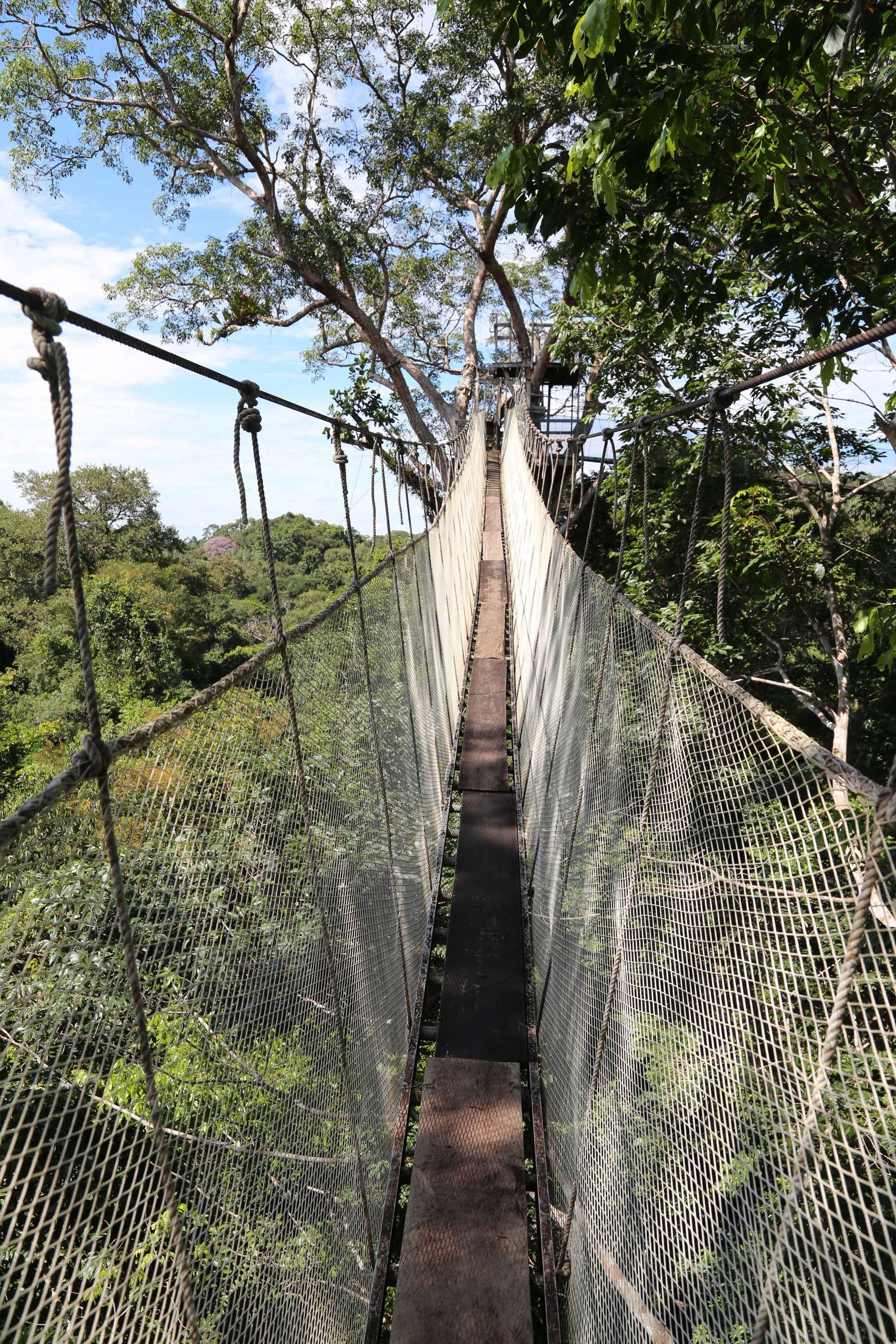 No one hurries along the canopy walkway, mostly because the views are so spectacular.